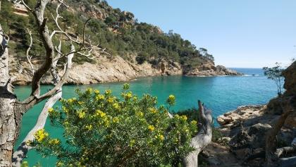Kontraste an der Costa Brava im Frühjahr (Cala Pola)