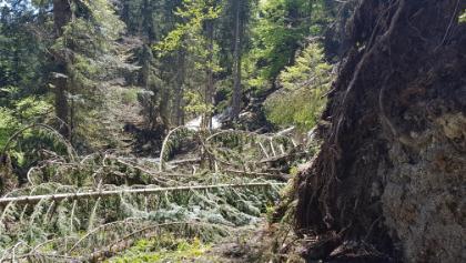 Abstieg vom Geierstein in Richtung Forkenstein. Unpassierbar!