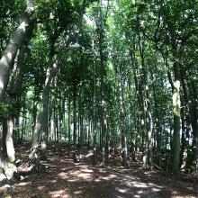 Erhabene Buchenwälder