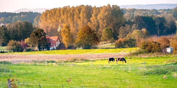 Ländliche Idylle in Borgholzhausen