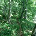 Bergab Trail nach dem Golfplatz (Blickrichtung nach oben fotografiert)