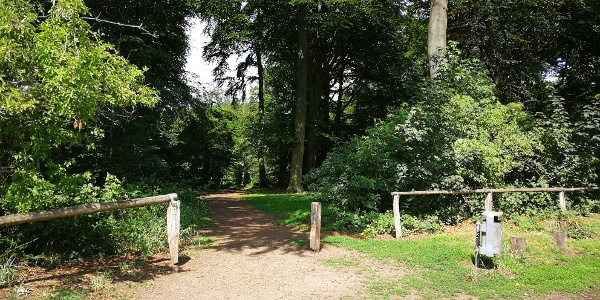 Startpunkt, Blick in den Waldweg