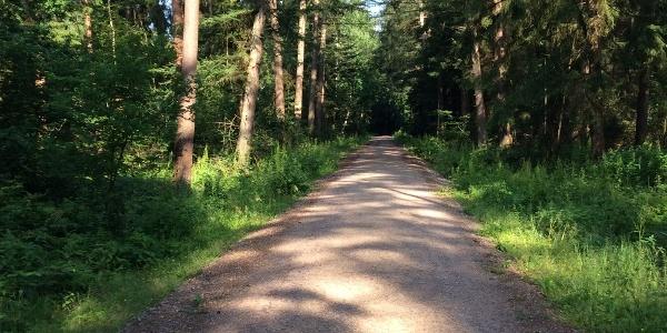 Teilabschnitt des Weges im Wald