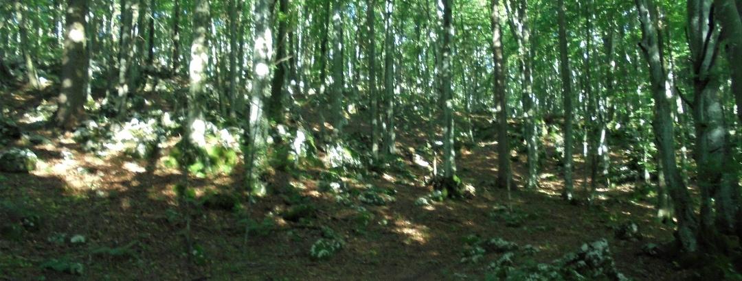 Na začetku pelje pot skozi gozd
