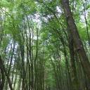 """Ein """"Hochwälder"""" Wald"""