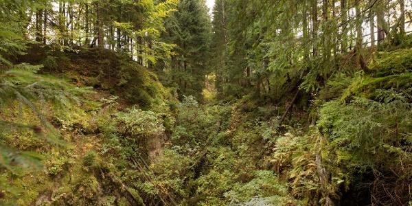 Bergbaulandschaft Eibenstock Schwarze Pinge