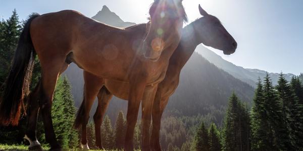 Pferde im Schwefeltobel