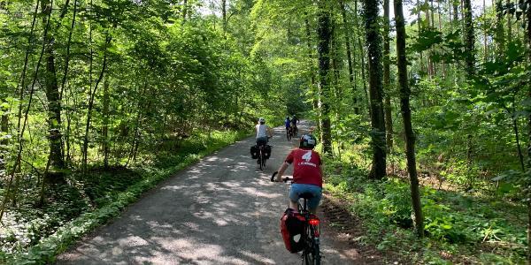 schöne Strecke durch den Wald bei Alternanz