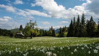 Rogarjev rovt - meja med občino KG in Jesenice