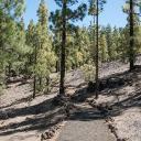 Die erste 8er-Scheife gegen Uhrzeigersinn. Lichter Wald nach kurzer Freifläche.