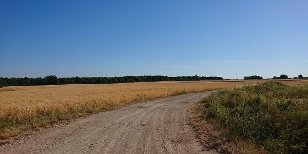 Chemin de l'aérodrome