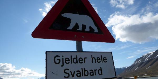 Vorsicht Eisbär - ab hier nur noch weiter in Begleitung eines bewaffneten Guides !