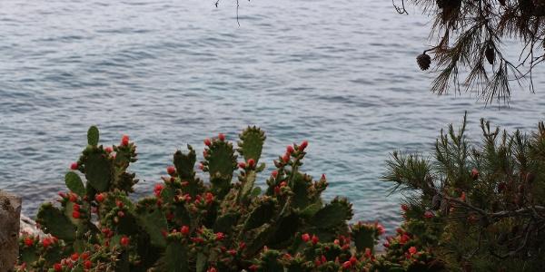 Mediterrane Flora säumt den Weg