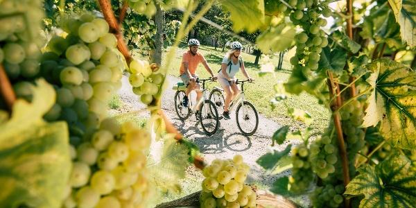 Radfahren, entlang der Weinberge