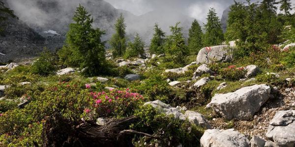wunderbare Berglandschaft unter den Ochsenhörnern