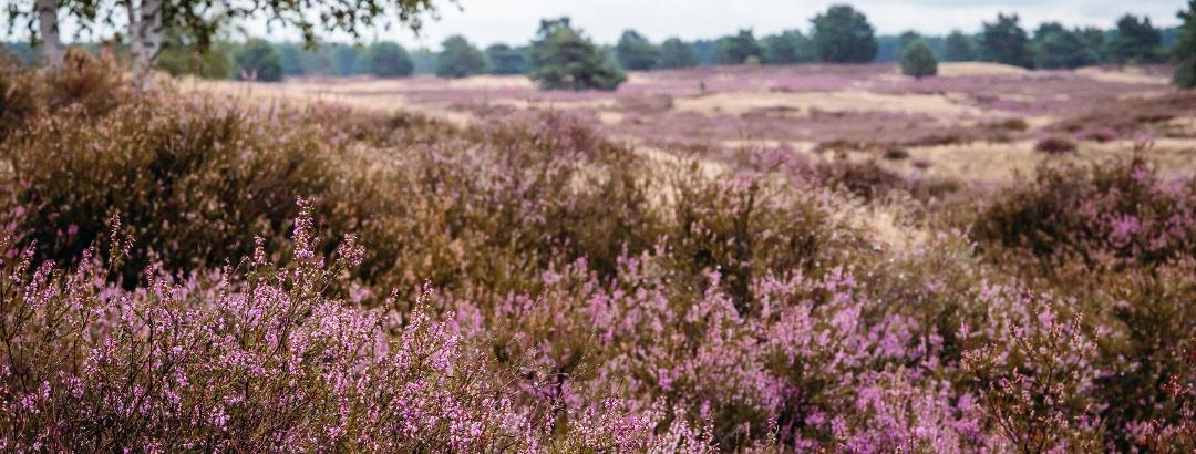 Nemitzer Heide