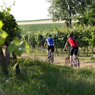 An Weingärten vorbei radeln
