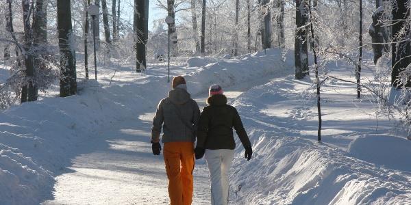 Winterwandern auf dem Hexentanzplatz Foto: Bodetal Tourismus Gmbh