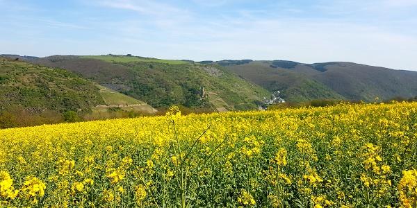 Traumschleifchen Pfalzblick - Burg Gutenfels