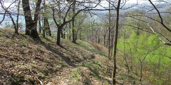 Trails am Südharzrand