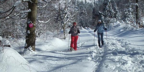 Schneeschuhtour 2 - Freiersberg