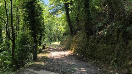 Auf alten Pfaden durch den Wald