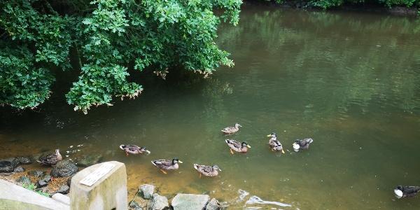 Duckpond