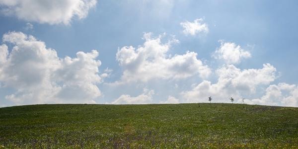 Blick über Blumenwiese