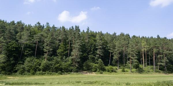 Blick auf Tannenwald