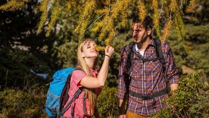 Waldbaden im Aletschwald - Medizin zum Einatmen