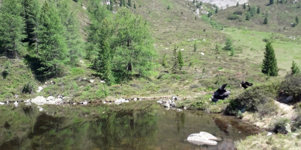 Einer der klaren Pfitscher Joch Seen mit Ausblick auf die Zillertaler Alpen.