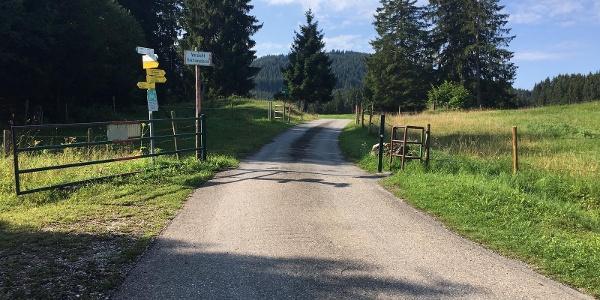 Weidegatter auf dem Fahrweg zum Buchenberg