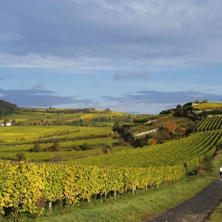 Weinlandschaft Spielberg / Herrenberg 2
