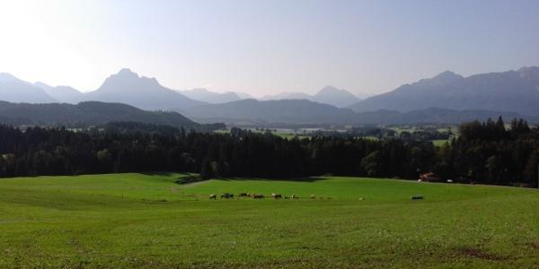 Ausblick über die Ammergauer und Allgäuer Alpen