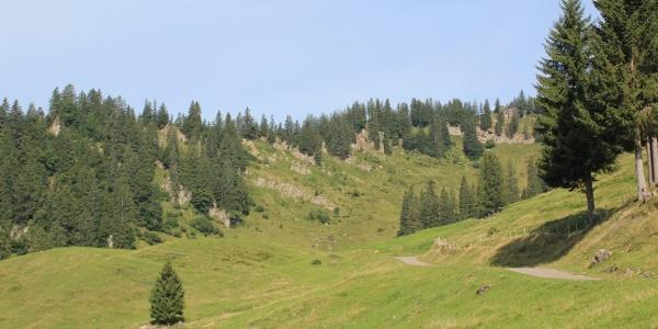 Weg richtung Alpe Spicherhalde