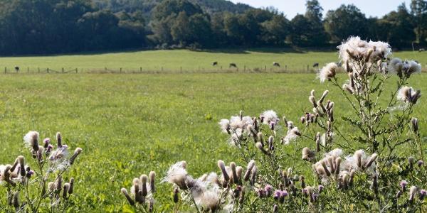 Blick über Weiden