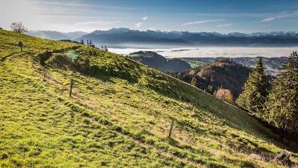 Herbstliche Aussicht von der Alp Scheidegg