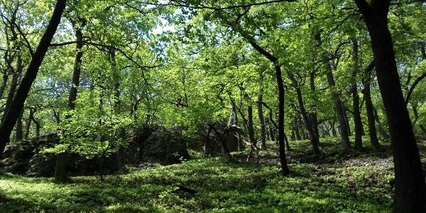 Frühlingswald beim Eisernen Mann