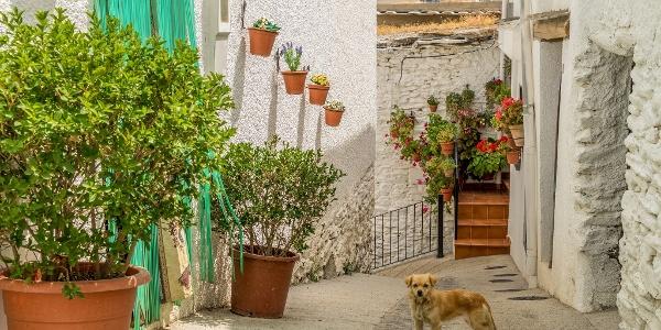 Dog on Trevélez Streets