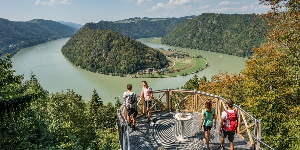 Donausteig - Schlögener Donauschlinge - Schlögener Blick