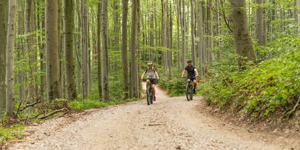 Anninger Trail