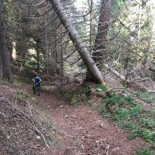 Trail bergauf