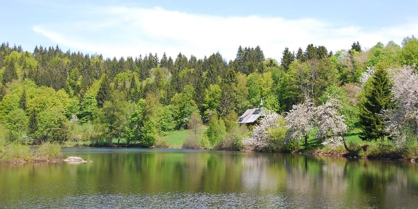 Klosterweiher im Frühling