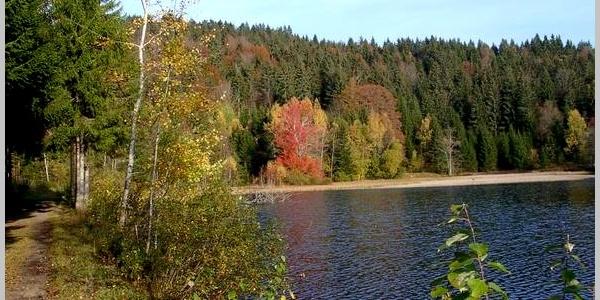 Klosterweiher im Herbst