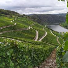 Mosel Loreley