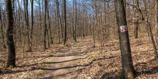 Vérbeli erdei ösvény vár ránk Pilisszentlászló után