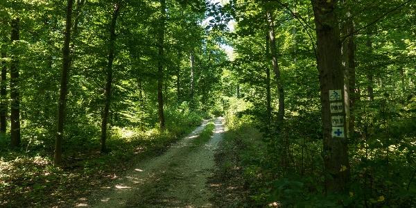 Az árnyékos utak még a nyári melegben is kellemes környezetet biztosítanak