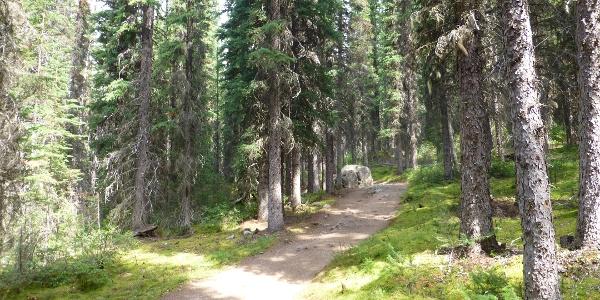 Gemütlich geht´s durch den Wald.