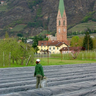 Campi di asparagi vicino alla pista ciclabile