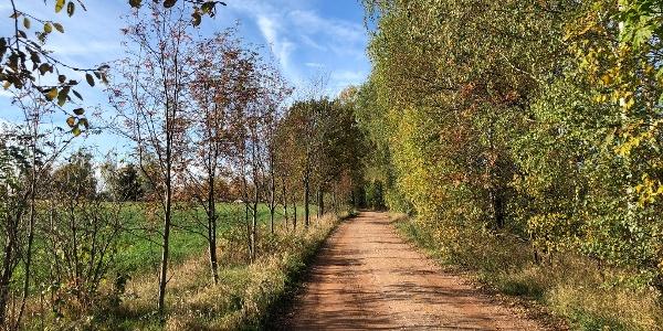 Eisenweg an der Tabakstanne in Thalheim